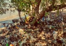 Ecoton - Sampah Plastik
